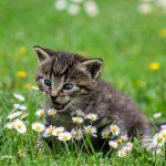 ¿Tu gato es zurdo o diestro? Te explicamos cómo saberlo