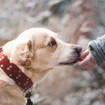 3 libros imprescindibles sobre adiestramiento canino